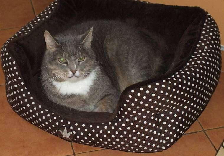 Домашние кошки и собаки объявлены главными разносчиками бешенства