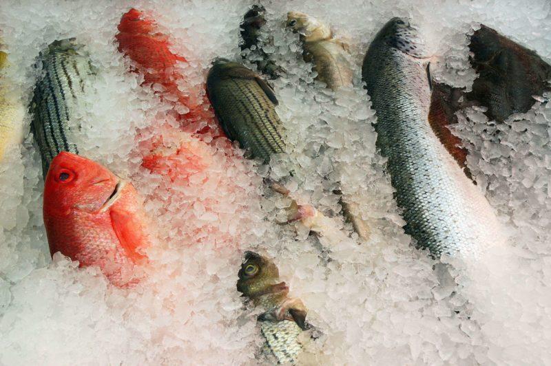 Волгоградское предприятие хранило 373 кг сомнительной рыбы