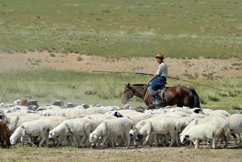 Под Волгоградом пастух украл у фермера более 900 овец