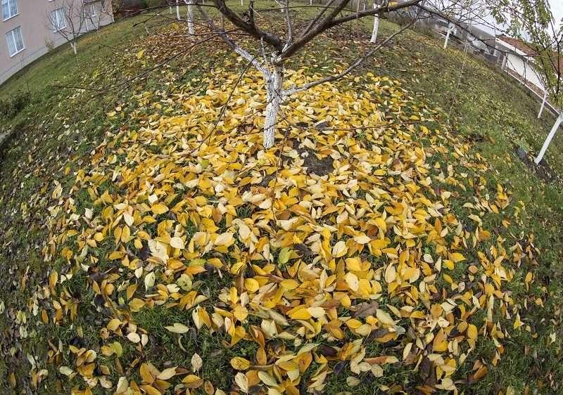 Приметы октября: Когда волгоградцам ждать зиму