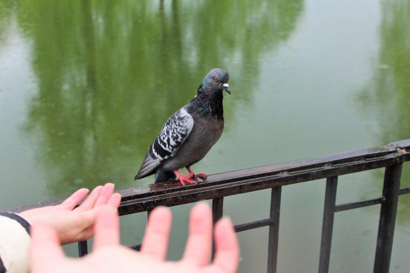 Птичку жалко: для чего нужно кормить птиц в холодное время года
