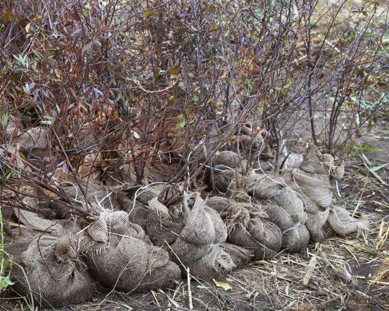 200 растений украсят территорию набережной вдоль Нулевой Продольной в Волгограде