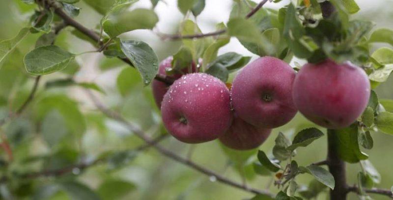 Октябрьский урожай: что можно собрать в осеннем месяце?