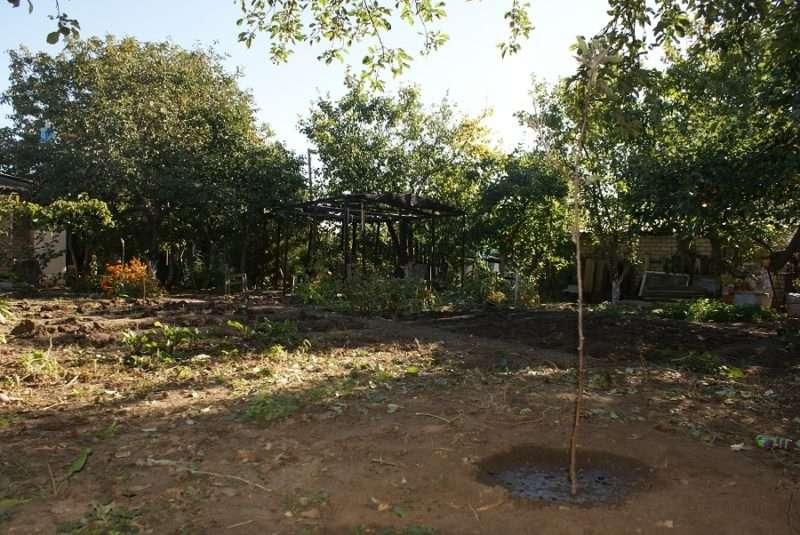 Настало время для посадок плодовых деревьев и кустарников
