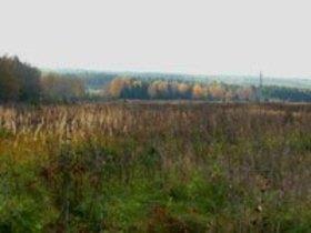 Сельское поселение в Октябрьском районе оштрафовали за поле сорняков