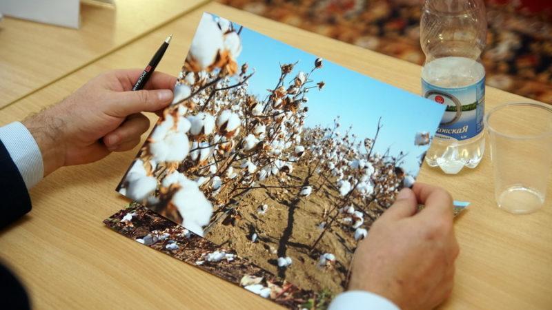 В Волгоградской области три сельхозпредприятия планируют выращивать хлопок