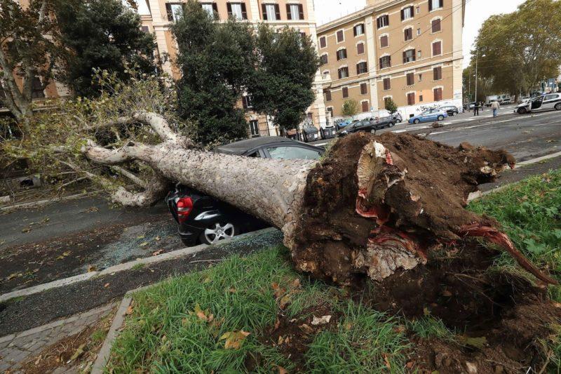Что делать, если рухнуло дерево