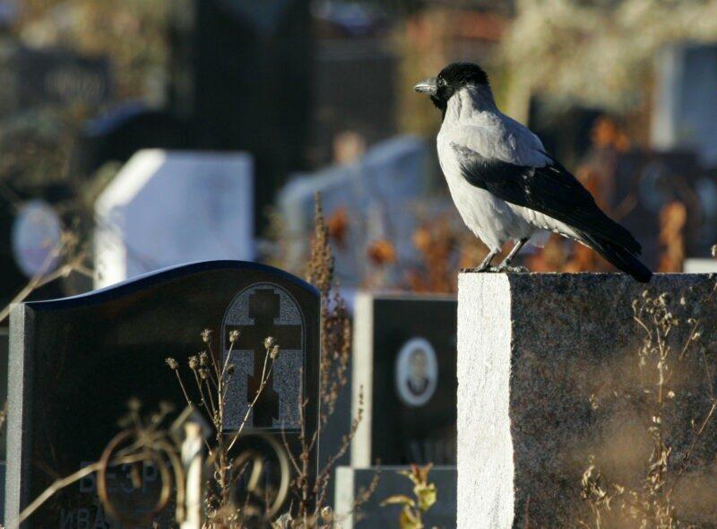 """Похоронный дом """"Память"""" будет отстаивать честь и достоинство, задетые УФАС"""