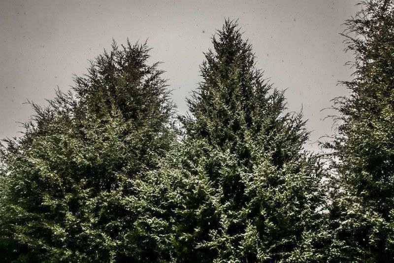Конец рабочей недели для волгоградцев будет туманным и морозным