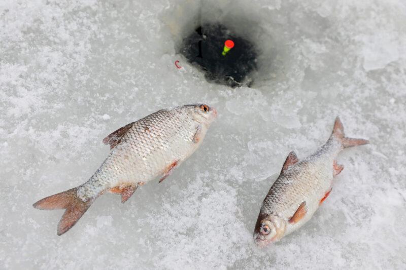 Мужчина в Волгоградской области наловил сеткой рыбы на 5 тысяч рублей подо льдом