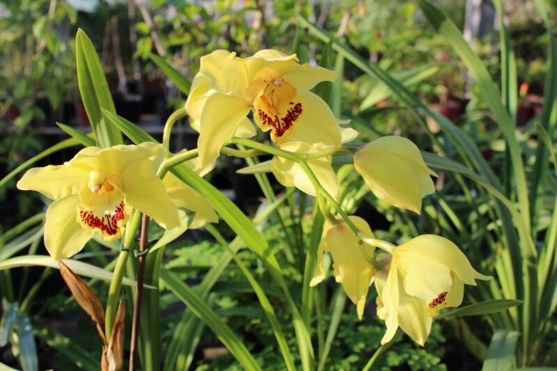 В Волжском пройдет практический семинар для любителей орхидей