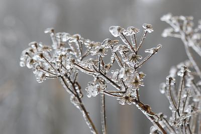 На выходных волгоградцев ждет морозная погода
