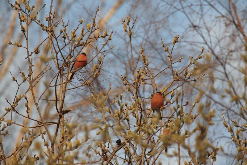 Как узнать, когда в регион придет весна?