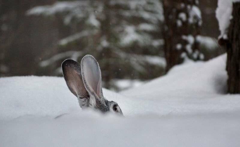 28 февраля в регионе закроется зимняя охота