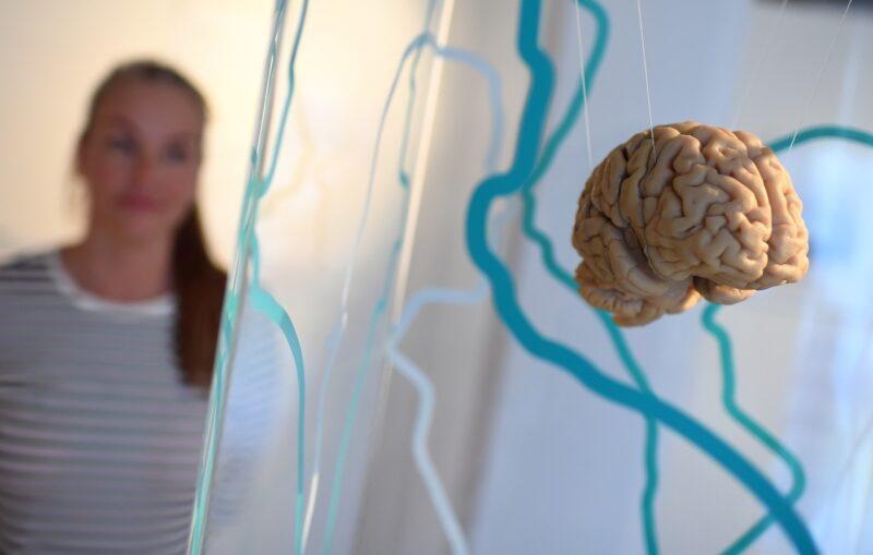 Как не дать состариться своему мозгу