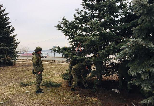Волгоградцы возмутились привлечением военнослужащих к «ёлкокопанию»