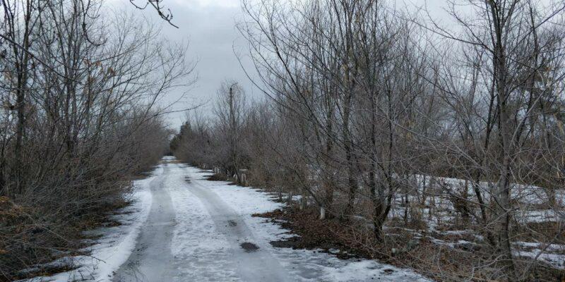 На леса в Волгоградской области направят более 3 млрд рублей