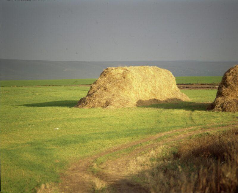 «Загулялся и уснул»: пропавшего мальчика нашли на окраине села в стоге сена