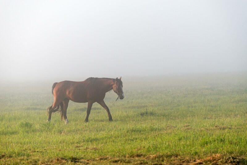 Столкновение лошади с иномаркой на трассе Волгоград-Астрахань оценили в полмиллиона рублей