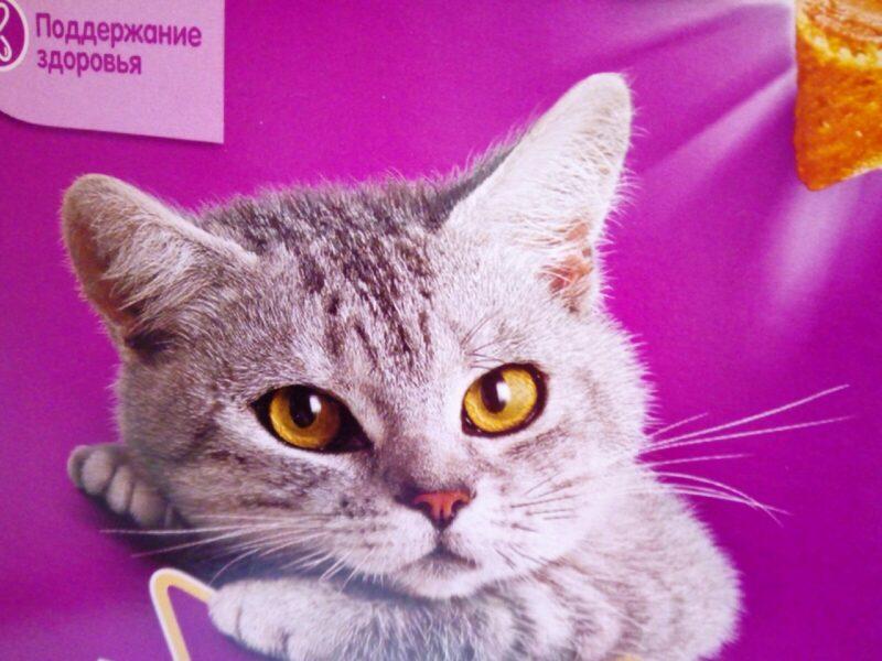 В Волгограде магазин товаров для животных не прошел проверку Россельхознадзора