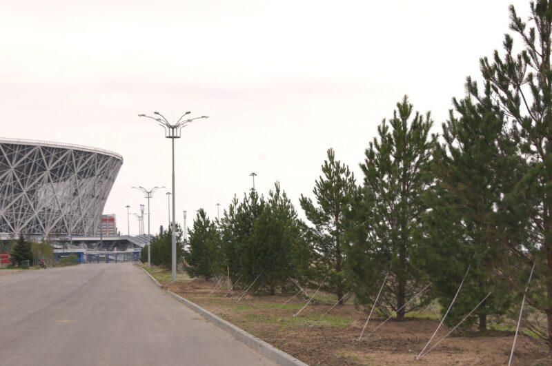 В ЦПКиО монтируют верёвочный городок и сажают пятиметровые деревья