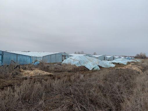 Владимир Ефимов: Ситуация с тепличными хозяйствами в регионе неутешительна
