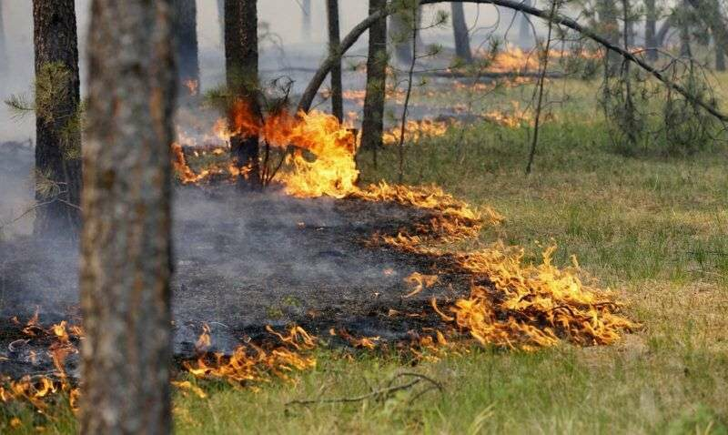 МЧС предупреждает о повышенной пожароопасности