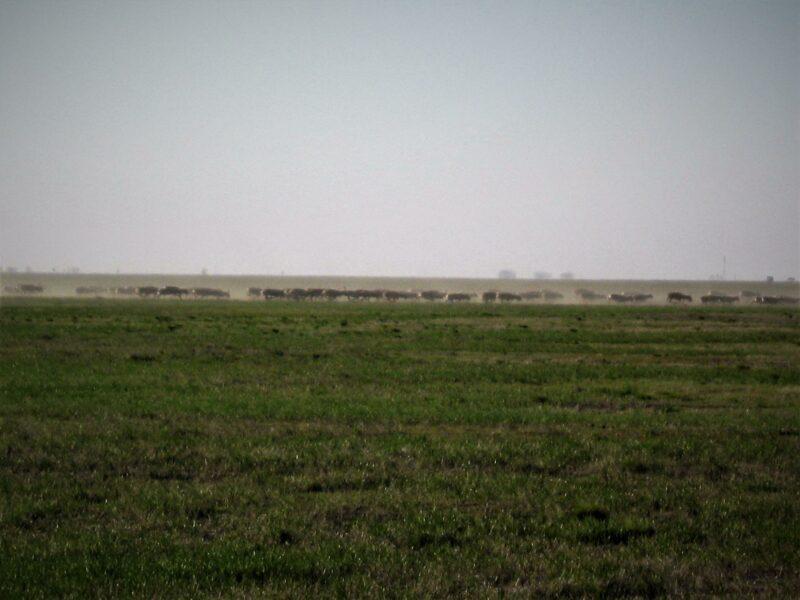 В Волгоградской области ждут возвращения сайгаков