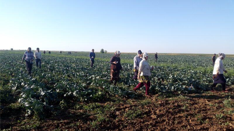В полях Городищенского района полицейские искали нелегалов