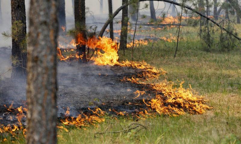 Комитет ОБЖ: Волгоградская область снова в опасности