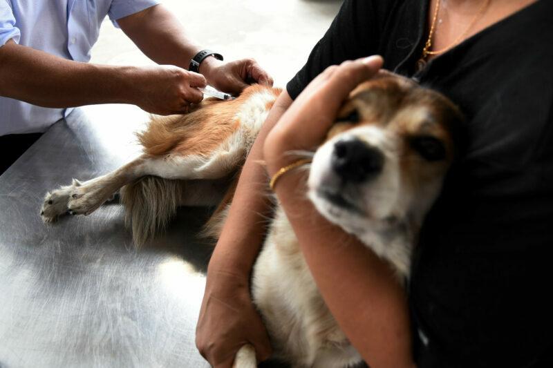 Волгоградцев просят избегать контактов с бездомными и дикими животными