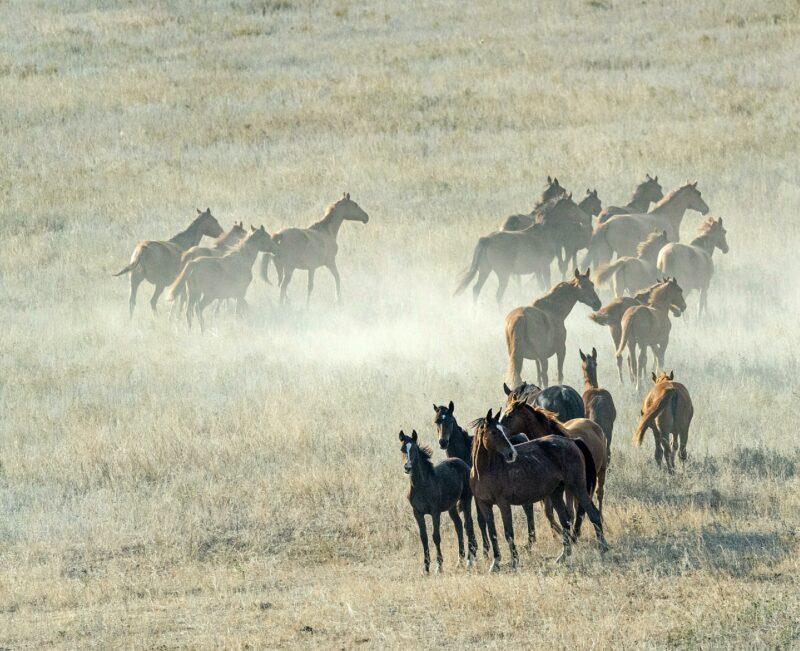 В Николаевском районе задержали похитителей лошадей