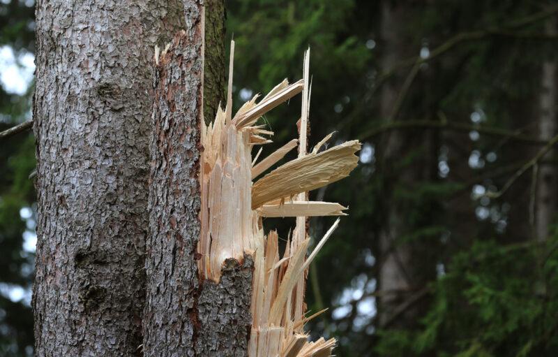 На волгоградку упало дерево: полицейские ищут свидетелей