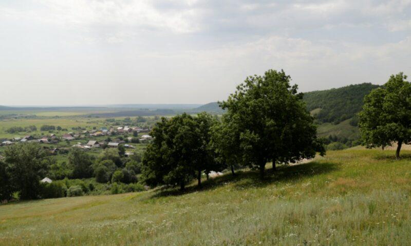 Полтора миллиона рублей заплатит житель Волгоградской области за вырубку заповедных деревьев