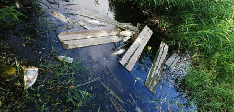 Настоящая катастрофа: в Вишневом пруду Волгограда массово гибнет рыба