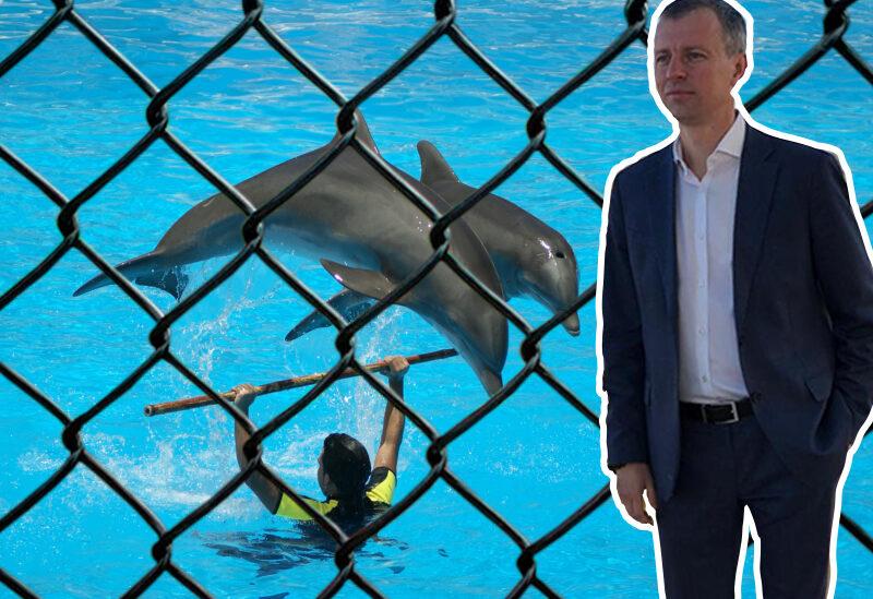 «С этой идеей мы прощаемся»: в Волгограде отказались от идеи строительства дельфинария