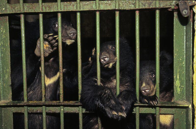 В Волгоградской области могут запретить «бродячие» цирки и зоопарки