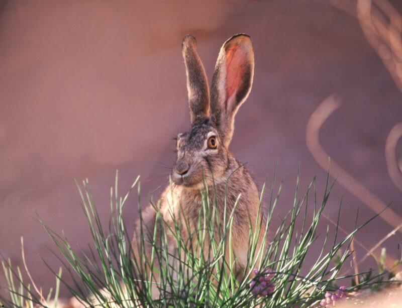 Охотник расстреливал ослепленных светом фар зайцев