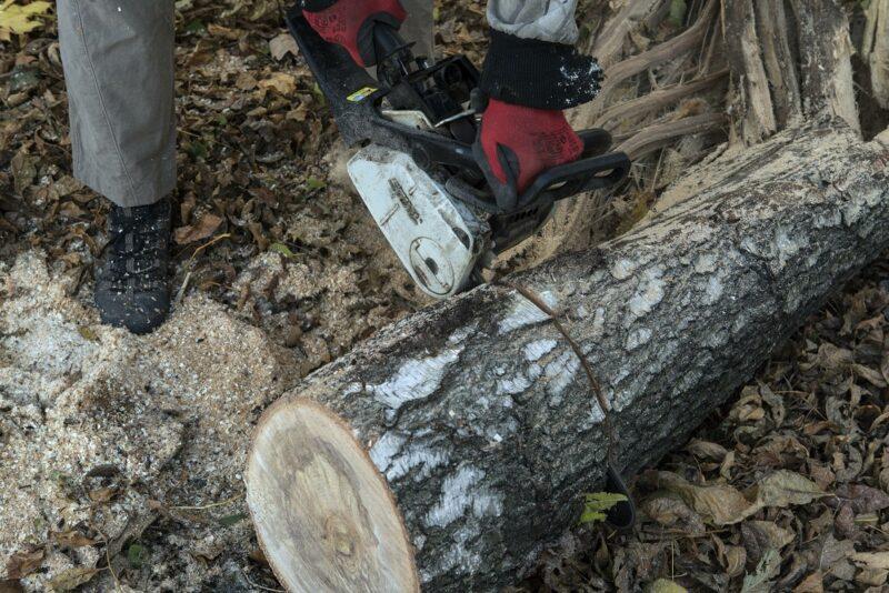 Здоровые деревья на Московской, 5а возможно спилили под видом сухостоя