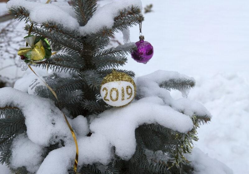 Остались без Нового года: под Волгоградом поймали похитителей ёлок