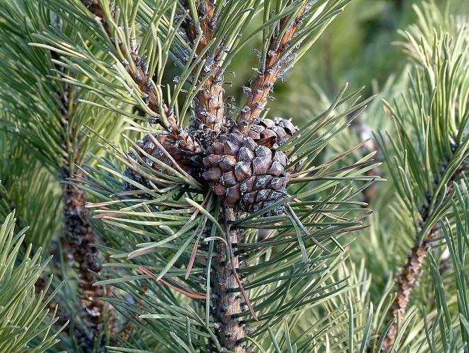 «В лесу родилась ёлочка»: Лесники Волгоградской области берегут сосны от браконьеров