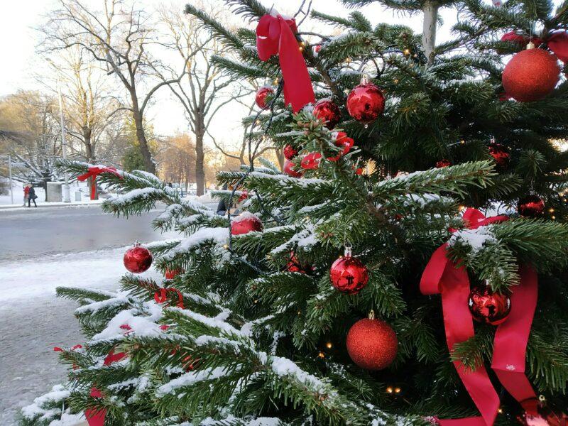 Опубликован список адресов, где будут продаваться новогодние елки
