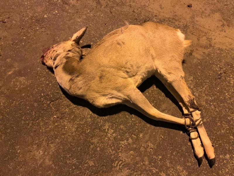 Под Волгоградом поймали браконьера с убитой косулей