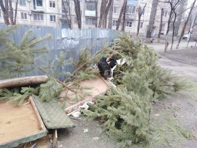 Надо было жаловаться: горы сосен и крупногабаритного мусора с Рождества захламляли дворы Кировского района