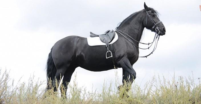 «Не трогать»: волгоградцы временно отстояли конюшни «Соснового бора»