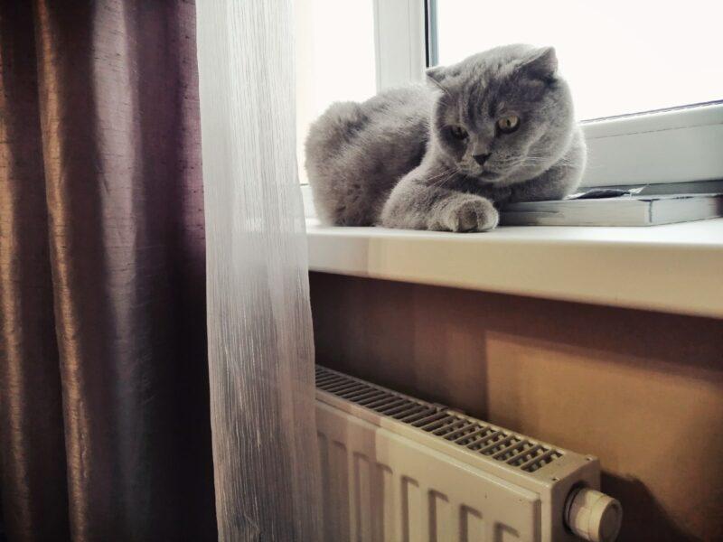 Синоптики рассказали о погоде в Волгограде в середине января