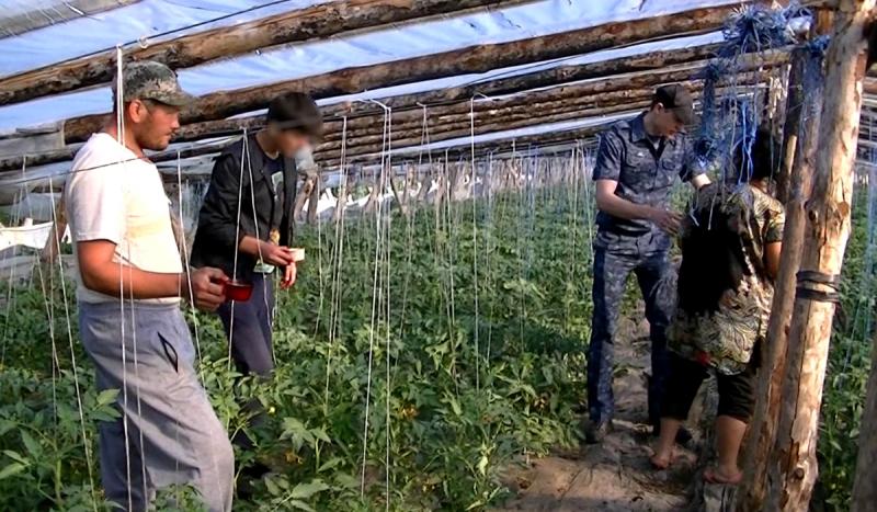 Из-за коронавируса Волгоград и всю Россию ждет резкое повышение цен на тепличные помидоры