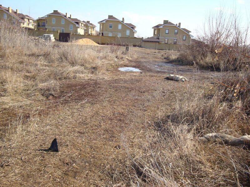 В Волгограде неизвестные расстреляли собак
