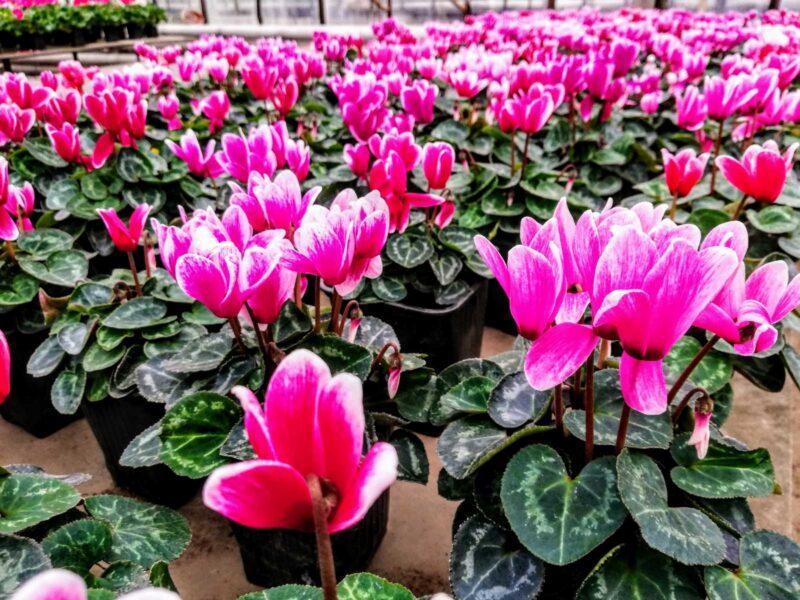 15 февраля в Волжском официально встретят весну