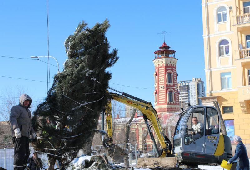 В центре Волгограда высаживают «лес»